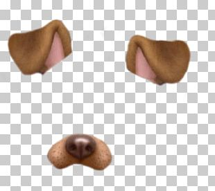 Dog Photographic Filter Standard Test PNG