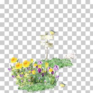Floral Design Jason Dean Wildflower Petal PNG