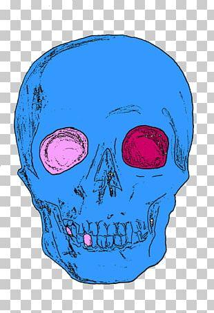 Skull Human Skeleton Homo Sapiens PNG