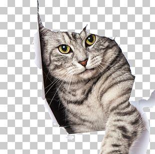 Big Cat Kitten Dog Pet Door PNG