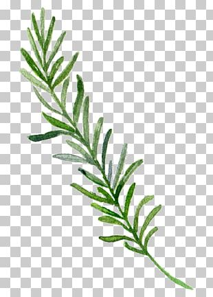 Watercolor Painting Border Leaf PNG