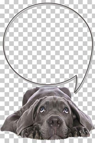 Labrador Retriever Cane Corso Pet Sitting Veterinarian PNG