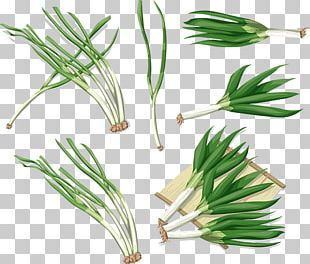 Allium Fistulosum Fish Steak Onion Vegetable PNG