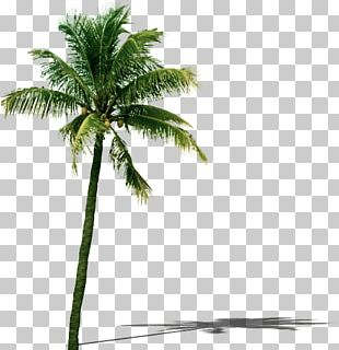 Coconut Tree Leaf PNG