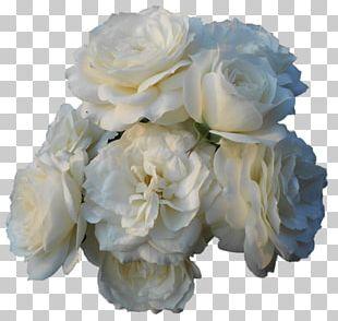Garden Roses Centifolia Roses Floral Design Gardenia Cut Flowers PNG