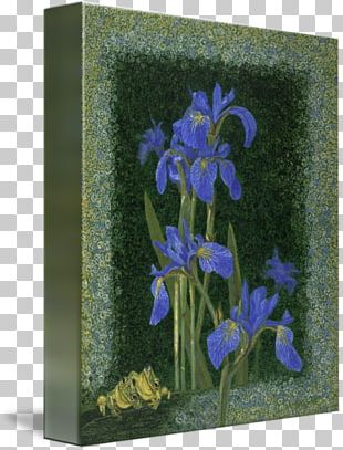 Irises Bellflower Family Gallery Wrap Art Printmaking PNG