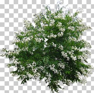 Landscape Architecture Shrub Tree Plant PNG