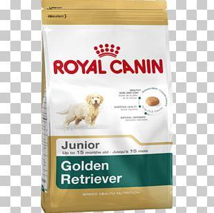 Golden Retriever Labrador Retriever Puppy Cat PNG