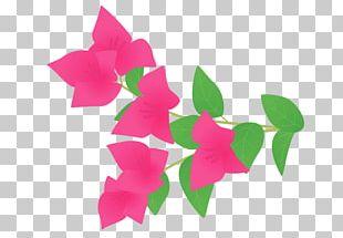 Bougainvillea Petal Cut Flowers Plant Stem PNG
