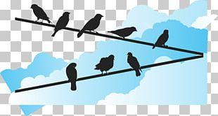 Bird Euclidean Wire PNG