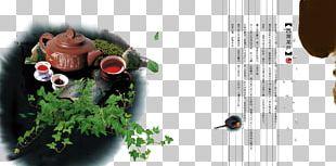 Green Tea Oolong Black Tea Japanese Tea Ceremony PNG