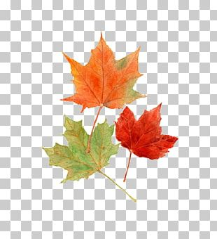 Autumn Leaf Color Drawing Watercolor Painting PNG