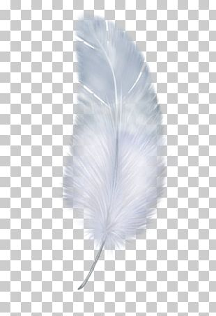 Feather Wing White PNG