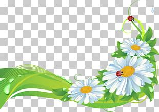 Flower Frames Stock Photography PNG