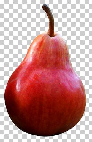 Comice Pears D'Anjou Accessory Fruit Apple PNG