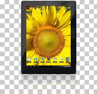 Stock Photography Sunflower M PNG