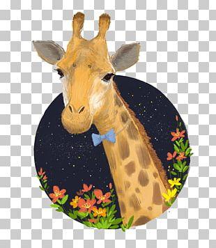 Northern Giraffe Reticulated Giraffe Drawing Illustration PNG