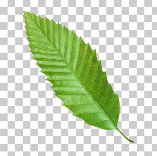 Leaf Euclidean Green Icon PNG