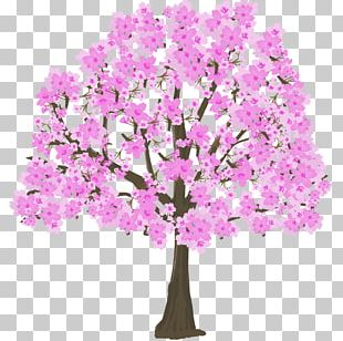 Cherry Blossom シリツトウメイカンチュウガッコウ Hanami Mabataki Flower PNG
