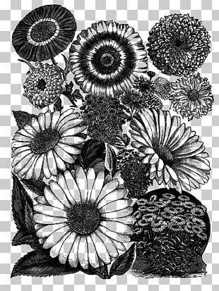 Practical Science For Gardeners Visual Arts Drawing Black And White PNG