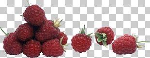 Strawberry Frutti Di Bosco Raspberry Loganberry Tayberry PNG