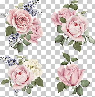 Rose Stock Illustration Flower Illustration PNG