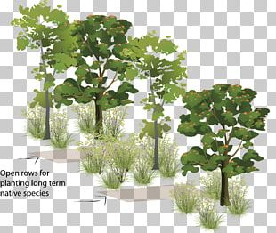 Woody Plant Tree Forest Shrub PNG