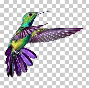 Hummingbird Wings 2 Tattoo T-shirt PNG