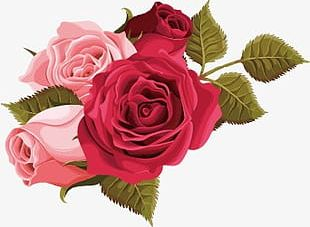 Pink Roses And Red Roses PNG