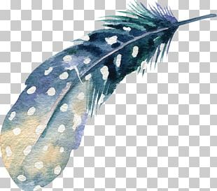 Watercolor Painting Feather Drawing Illustration PNG