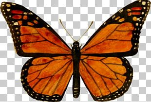 Monarch Butterfly Biosphere Reserve Viceroy Milkweed Butterfly PNG