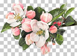 Flower Watercolor Painting Apple Drawing PNG