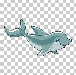 Dolphin PNG
