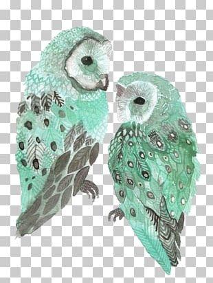 Owl Bird Blue Green PNG