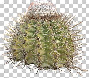 Cactaceae Thorns PNG
