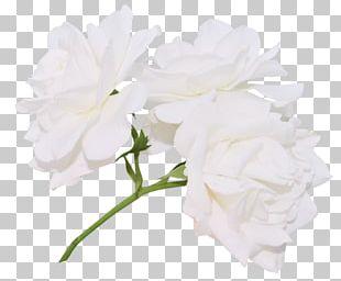 Cut Flowers Flower Bouquet Petal Plant Stem PNG
