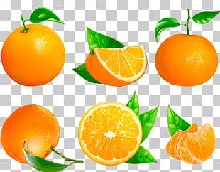 Clementine Mandarin Orange Tangerine Blood Orange Bitter Orange PNG