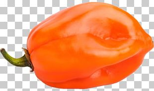 Habanero Chili Pepper Bell Pepper Stock Photography Capsicum PNG