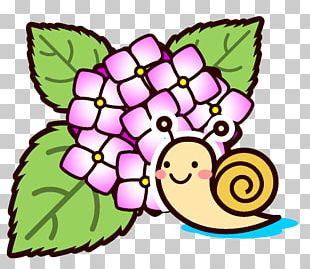 French Hydrangea Snail East Asian Rainy Season Illustration PNG