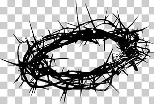 Crown Of Thorns Christianity Thorns PNG