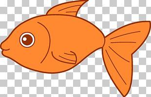 Koi Fish PNG