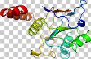Body Jewellery Organism Line PNG