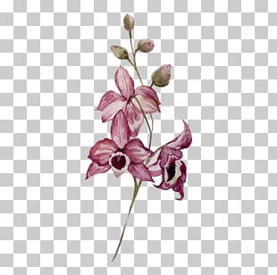 Watercolor Painting Drawing Flower Orchids PNG