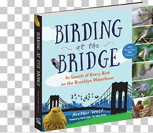 Birding At The Bridge: In Search Of Every Bird On The Brooklyn Waterfront Birdwatching Great Florida Birding Trail How To Be An Urban Birder PNG