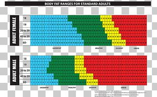 Body Fat Percentage Adipose Tissue Human Body Chart PNG