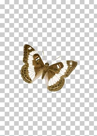 Brush-footed Butterflies Butterfly Moth Drawing Brown PNG