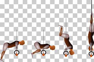 Handstand Kip Gymnastics Rings L-sit Shoulder PNG