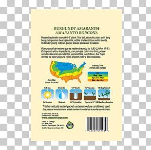 Organic Food Seeds Of Change Zucchini Organic Certification PNG