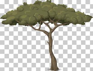 Tree Arborist Trunk Botany Garden PNG