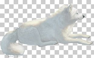 Dog Breed Canadian Eskimo Dog American Eskimo Dog Arctic Fox Polar Bear PNG
